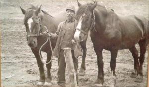 Dudek horses